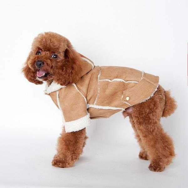 Coats, Jackets & Winter Wear For Your Dog