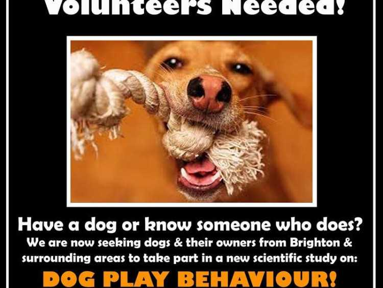 Dog Volunteers Wanted!